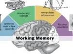 ¿Buscas información sobre los aspectos de la memoria?